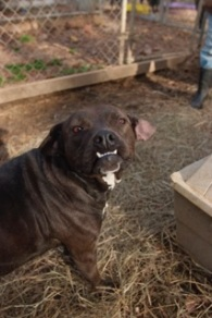 Illa was taken from the shelter as a young puppy but no one would give her a chance. I love her underbite!